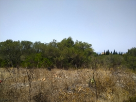 Developable plot of 2.000 m² in Son Gual